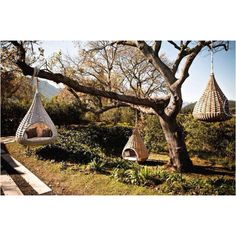 Hanging tree beds