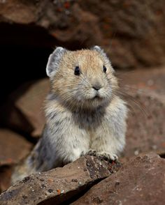 Hidden From Humans for 20 Years, This Little Cutie Is The Real-Life Teddybear You Never Knew Existed