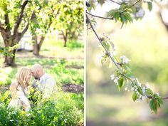 Orchard engagement session Danielle Gillett Photography
