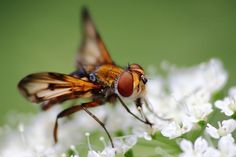 Kostenloses Foto: Insekt, Fliege, Flügel, Nahaufnahme - Kostenloses Bild auf Pixabay - 810038