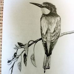Bee-eater, pencil on paper by Ged Peter Lynn of Slakewater Creative
