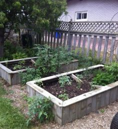 Old fence boards used to make raised garden boxes. Pallet Garden Box, Pallets Garden, Garden Boxes, Pallet Gardening, Garden Ideas, Garden Tips, Pallet Planters, Building A Raised Garden, Raised Garden Beds