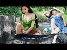 Wow! Amazing Girl Use PVC Pipe Fish Trap Catch A Lot Of Fish At Rice Field - YouTube