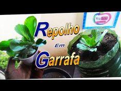 Como plantar Repolho Muito Fácil (Garrafa, Vasos, Dicas) #2 - YouTube