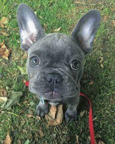 Puppy Eyes ❤️❤️❤️