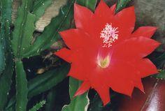 https://flic.kr/p/J88bVR | Cactus | 부모도 반의사가 되어야 한다 www.koreapediatrics.com