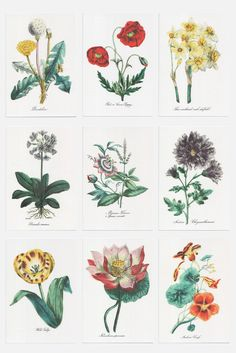 Image of The American Flora - Note Card Set