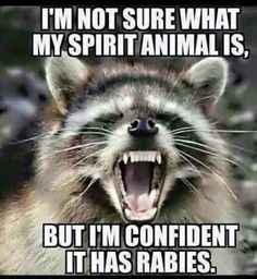 30 Short Funny Words And Funny Quotes Of The Day, jokes, spirit animal, rabies, memes Funny Shit, Haha Funny, Funny Stuff, Funny Sarcastic, Top Funny, Sarcastic Quotes, Funny Pics, Sarcastic Images, Funny Animal Pictures