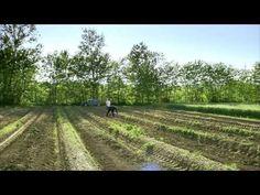 3/4 The Gourmet Garden - Monty Don's French Gardens