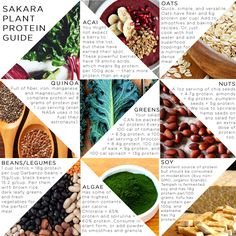 The Sakara Life Guide to Plant Protein