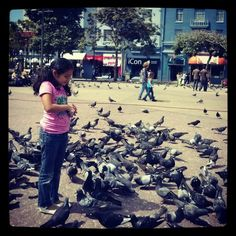 Jugando con palomas