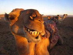 18 Goofy Animals Taking Awesome Selfies: 18 Goofy Animals Taking Awesome Selfies