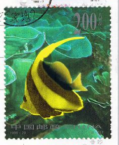 """Stamp CN: """"Striped Fish 2"""" From hyacinth"""