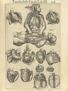 Page 108 of Juan Valverde de Amusco's Anatomia del corpo humano, 1560 featuring a cadaver with its fingers in another cadaver. Around the two cadavers are images of the heart. From the collection of the National Library of Medicine. Visit: http://www.nlm.nih.gov/exhibition/historicalanatomies/valverde_home.html