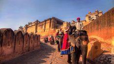 Rajasthan India, Monument Valley, Camel, Asia, Nature, Animals, Google, India, Goa India