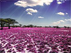 Beloved Continent --- Africa