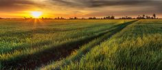 Sekinchan is a small town located in the state of Selangor, Malaysia. Sekinchan is one of the major rice producing areas of Malaysia.