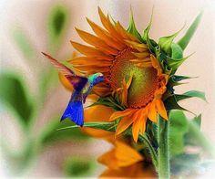 A bird and a flower