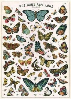 "Cavallini Butterfly Chart Wrap 20"" x 28"" - Printed on Cavallini's signature Italian paper (archival) - Perfect for wrapping, as posters, framing and other creative endeavors - Best selling and most or"