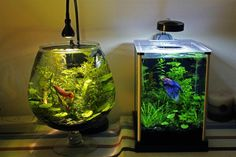 Betta Fish Tank Setup Ideas That Make A Statement! You are just gonna love these spiffy betta fish tank setup ideas! We did our best to find examples and great betta fish decorating ideas for pet fish enthusiasts of all persuasions. Planted Aquarium, Betta Aquarium, Aquarium Lamp, Betta Fish Bowl, Beta Fish, Betta Tank, Aquascaping, Nano Tank, Siamese Fighting Fish