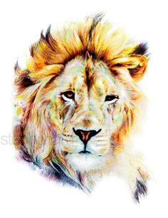 Lion - crayon sur papier - impression numérique