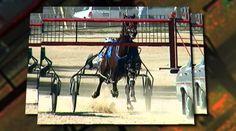 Harness horse racing in Ohio. Harness Racing, Race Day, Horse Racing, Ohio, Horses, Watch, Animals, Image, Animais
