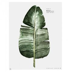 Affiche Urban botanic Musa