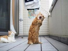 24 Cute And Funny Cat Photos For National Cat Day. | The Blended Fun