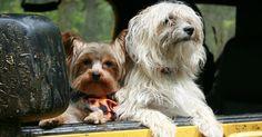 13 cosas que debes tener en cuenta a la hora de viajar con tu perro
