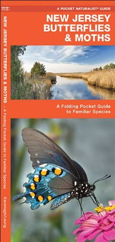 New Jersey Butterflies & Moths: A Folding Pocket Guide to...