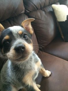 adorable!!!!!! .... might be time to get another little puppy!!!