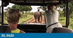 Lonely Planet elige los países, las ciudades y las regiones estrella para el año que viene en su lista 'Best in Travel' Lonely Planet, Elephant, Album, Travel, Animals, Vacations, Countries, Cities, Proposals