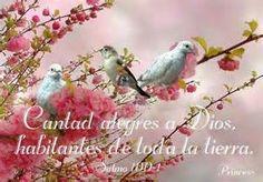 Beautiful by maria. Psalms, Creatures, Birds, Animals, Beautiful, Mina, Google, Baby, Christianity