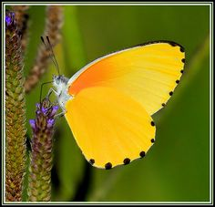 Butterfly Explore | Flickr - Photo Sharing!