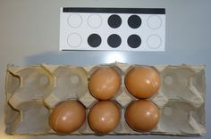 use egg carton as a tens frame Math 4 Kids, Preschool Math, Teaching Math, Montessori Activities, Activities For Kids, Kindergarten, Subitizing, Love Math, Math Numbers
