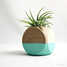 This air plant display has been hand painted aqua for a natural wood color block effect. The wood planter perfectly compliments and highlights the