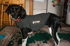 Enter for your chance to win a FREE Thundershirt! This little shirt helps with all sorts of pet anxiety problems.