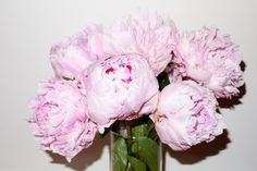 Who can say no to pretty pink peonies?
