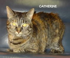 ADOPTED!  STRAY Tag# 3109 Name is Catherine  Tortie/Tiger Mix  Female-spayed Front paw declaw  https://www.facebook.com/267166810020812/photos/a.694418643962291.1073742061.267166810020812/694418693962286/?type=3&theater