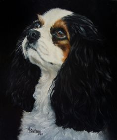Cavalier - SOLD original oil of a Cavalier King Charles Spaniel, painting by artist Anne Zoutsos