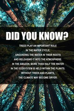 Thursday trivia! 😉 Water Cycle, Trivia, Did You Know, Thursday, Facts, Quizes
