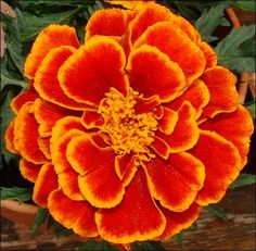 Marigold for Oct Love the colors