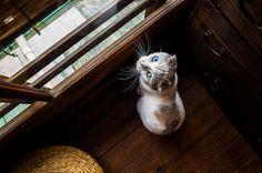sentry (at a cat cafe, Kyoto) | Flickr - Photo Sharing!