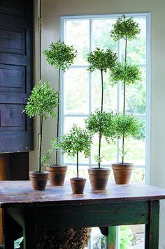 House Plants for Decorating Table, Faux Topiary Table Plants at Restyle Source
