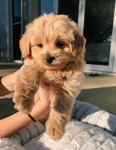 Super Cute Puppies, Baby Animals Super Cute, Cute Little Puppies, Cute Little Animals, Cute Dogs And Puppies, Cute Funny Animals, Baby Dogs, Cute Babies, Doggies
