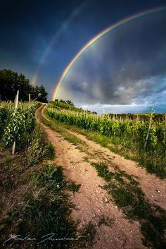 Storm clouds and rainbow (Crozes Hermitage, Rhône wine region, France) by Xavier Jamonet