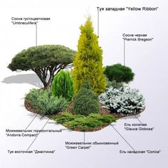 Coniferous group of all-round visibility. Evergreen Landscape, Garden Landscape Design, Evergreen Garden, Front Yard Landscaping, Backyard Landscaping Designs, Evergreen Landscape Front Yard, Shrubs For Landscaping, Small Front Yard Landscaping, Front Yard Garden Design
