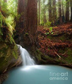 Serene hidden waterfall in redwood forest in Thornewood Open Space, near Palo Alto, California