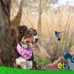 Buenos días ☀️ feliz viernes 👍🏼  #PetsWorldMagazine #RevistaDeMascotas #Panama #Mascotas #MascotasPanama #MascotasPty #PetsMagazine #MascotasAdorables #Perros #PerrosPty #PerrosPanama #Pets #PetsLovers #Dogs #DogLovers #DogOfTheDay #PicOfTheDay #Cute #SuperTiernos