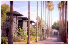 Palm Walk Arizona State University ASU Tempe Campus Landscape Architecture
